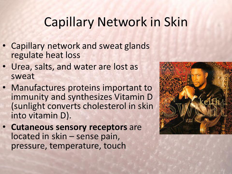 Capillary Network in Skin