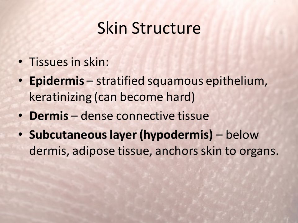Skin Structure Tissues in skin: