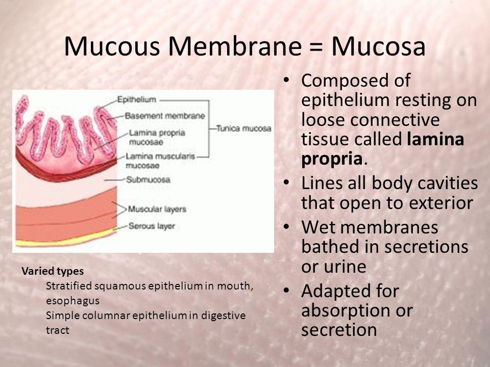 Mucous Membrane = Mucosa