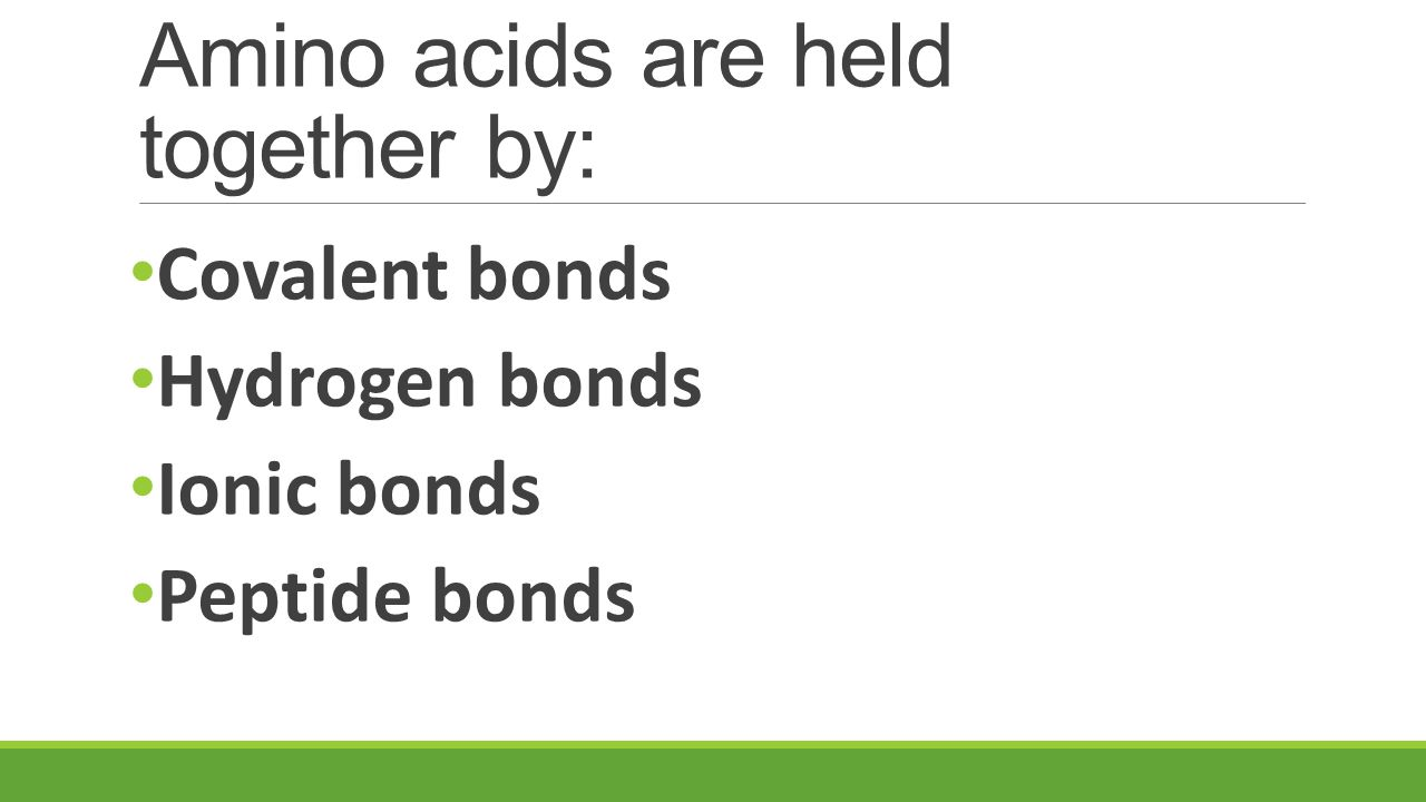 Amino acids are held together by: