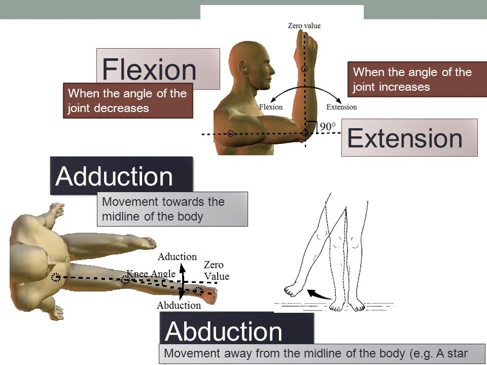 Flexion Extension Adduction Abduction