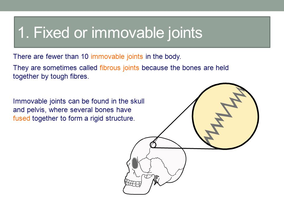 1. Fixed or immovable joints
