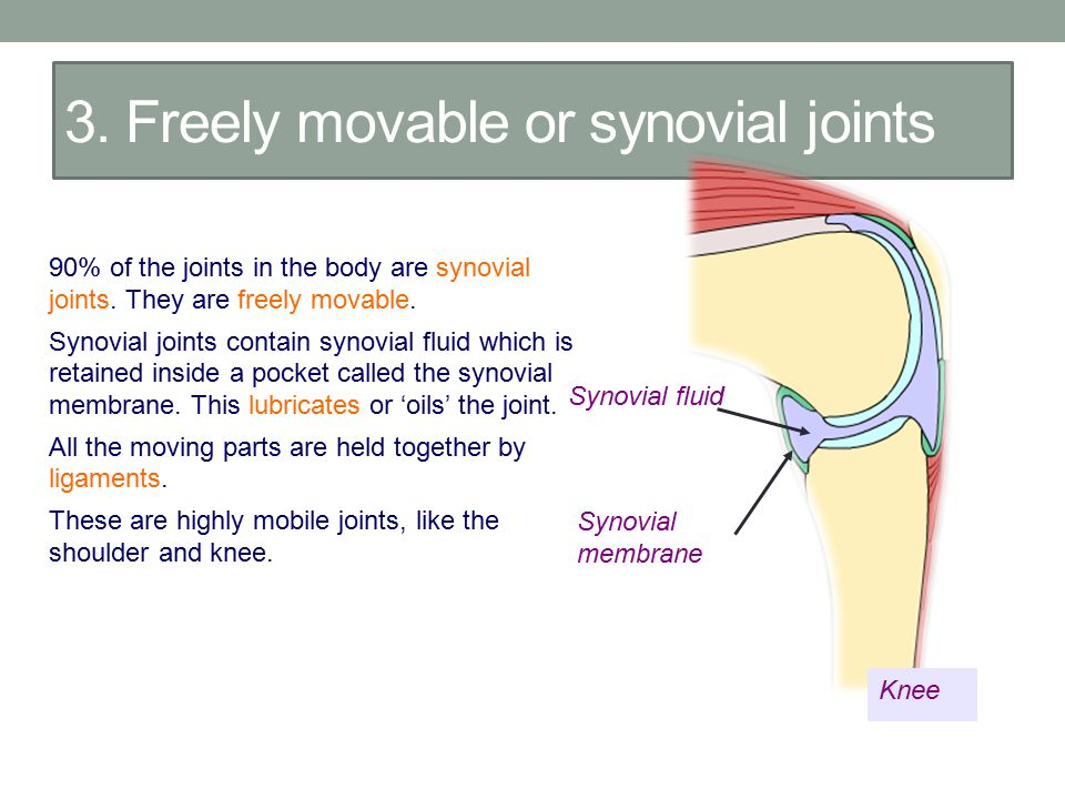 3. Freely movable or synovial joints