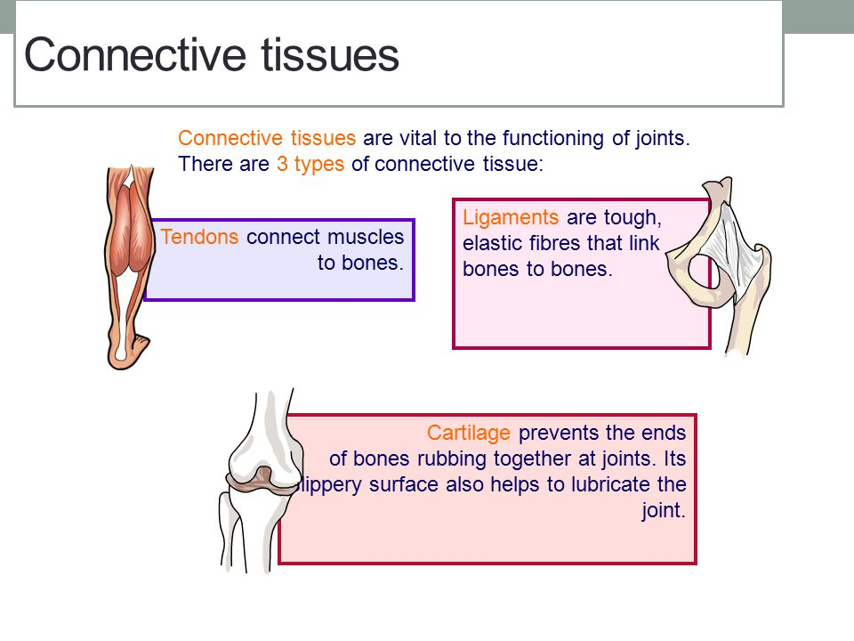 Connective tissues Connective tissues are vital to the functioning of joints. There are 3 types of connective tissue: