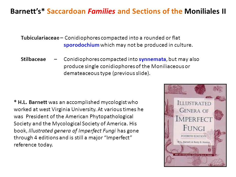Barnett's* Saccardoan Families and Sections of the Moniliales II