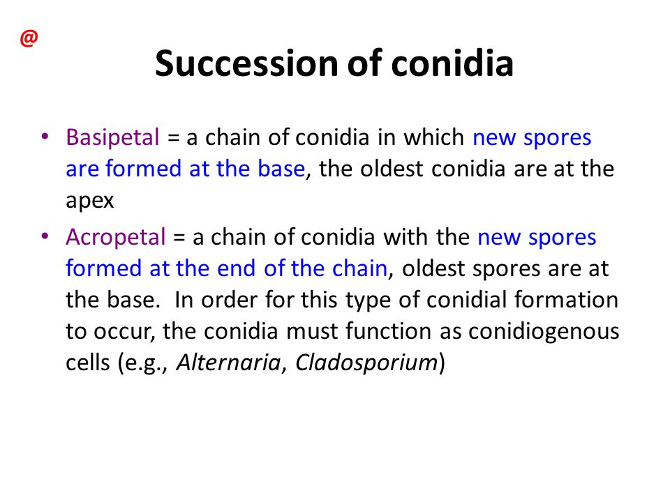 @ Succession of conidia. Basipetal = a chain of conidia in which new spores are formed at the base, the oldest conidia are at the apex.
