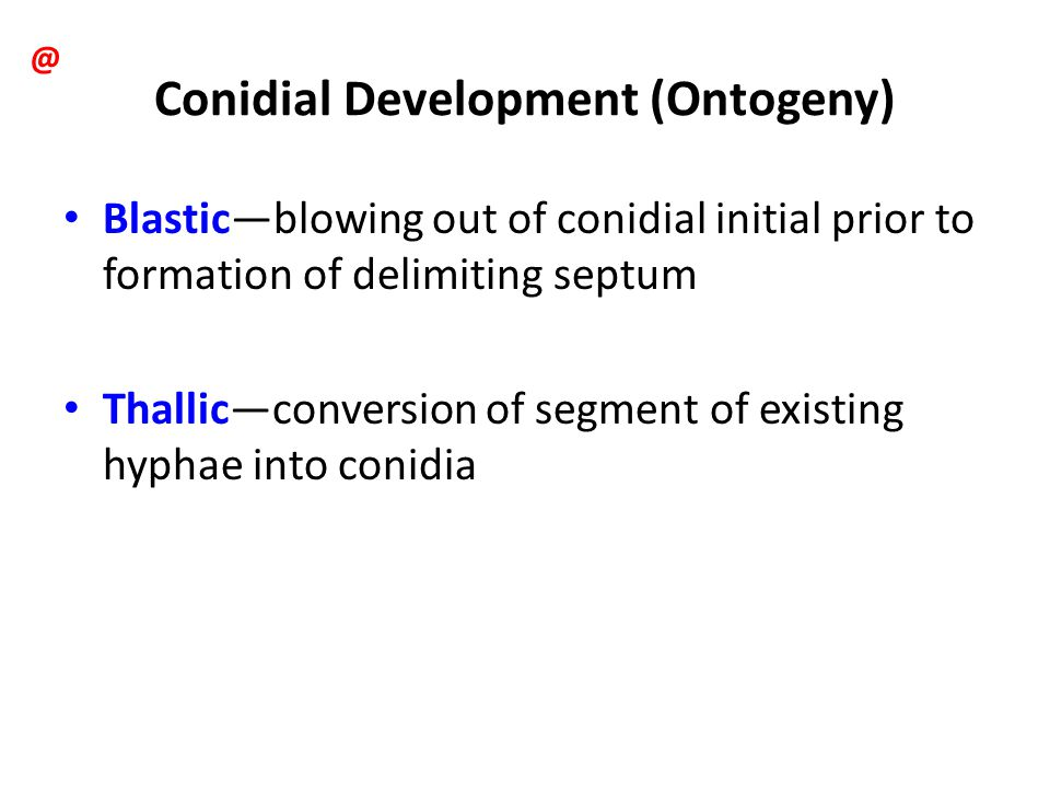 Conidial Development (Ontogeny)