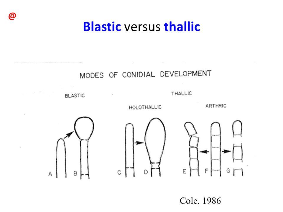 Blastic versus thallic