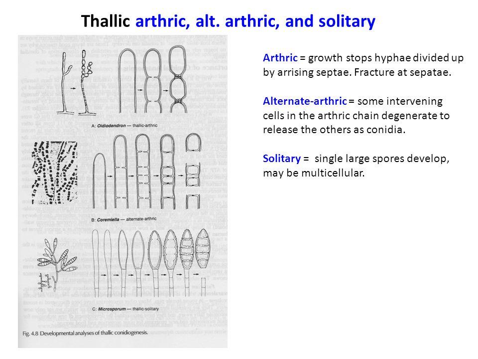 Thallic arthric, alt. arthric, and solitary