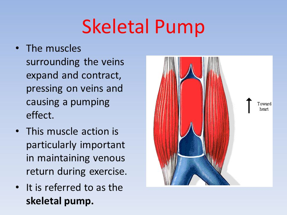 Skeletal Pump The muscles surrounding the veins expand and contract, pressing on veins and causing a pumping effect.