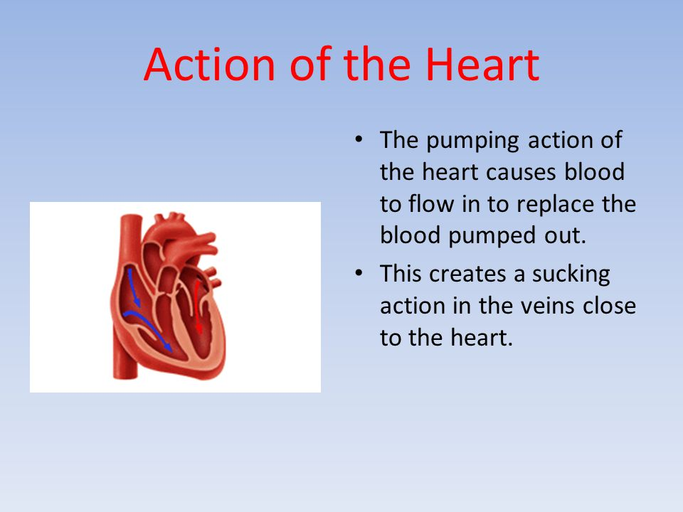 Action of the Heart The pumping action of the heart causes blood to flow in to replace the blood pumped out.