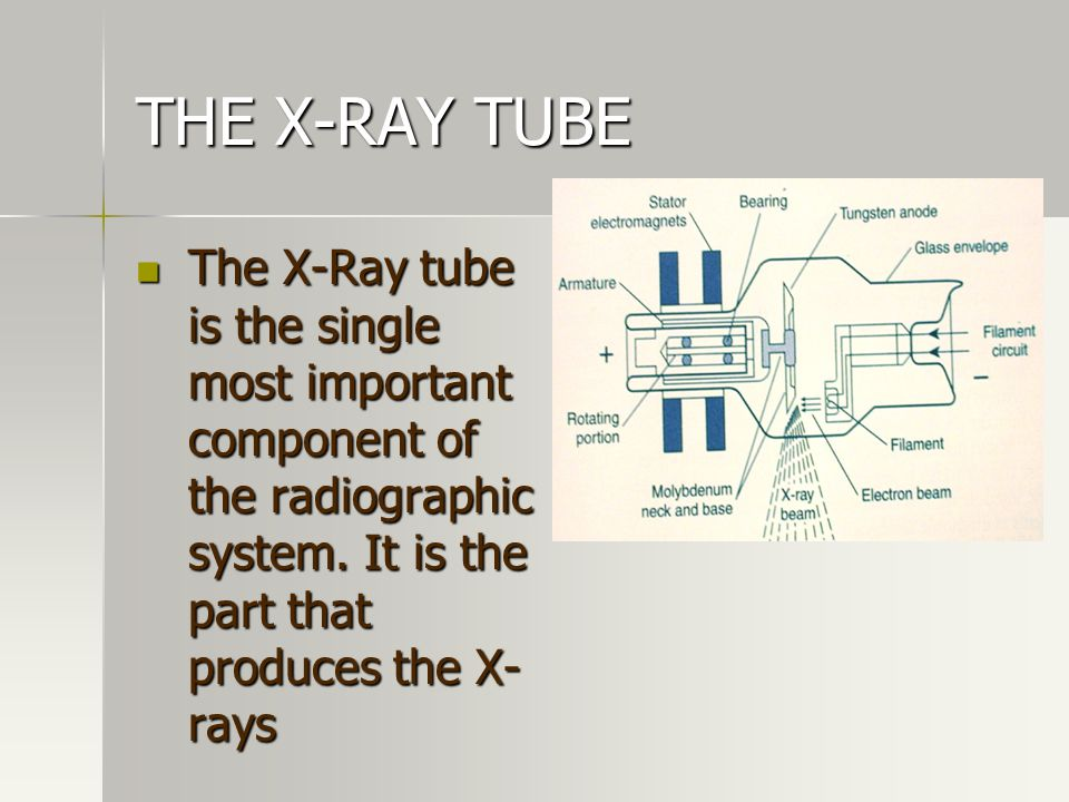 THE X-RAY TUBE The X-Ray tube is the single most important component of the radiographic system.