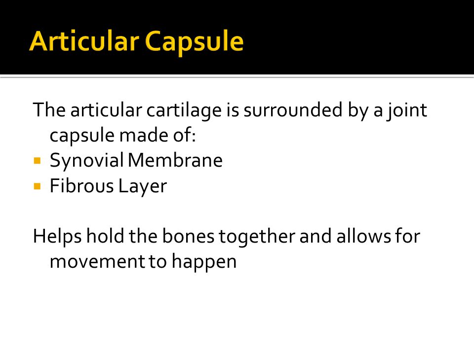 Articular Capsule The articular cartilage is surrounded by a joint capsule made of: Synovial Membrane.