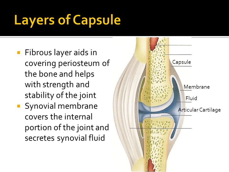 Layers of Capsule Fibrous layer aids in covering periosteum of the bone and helps with strength and stability of the joint.