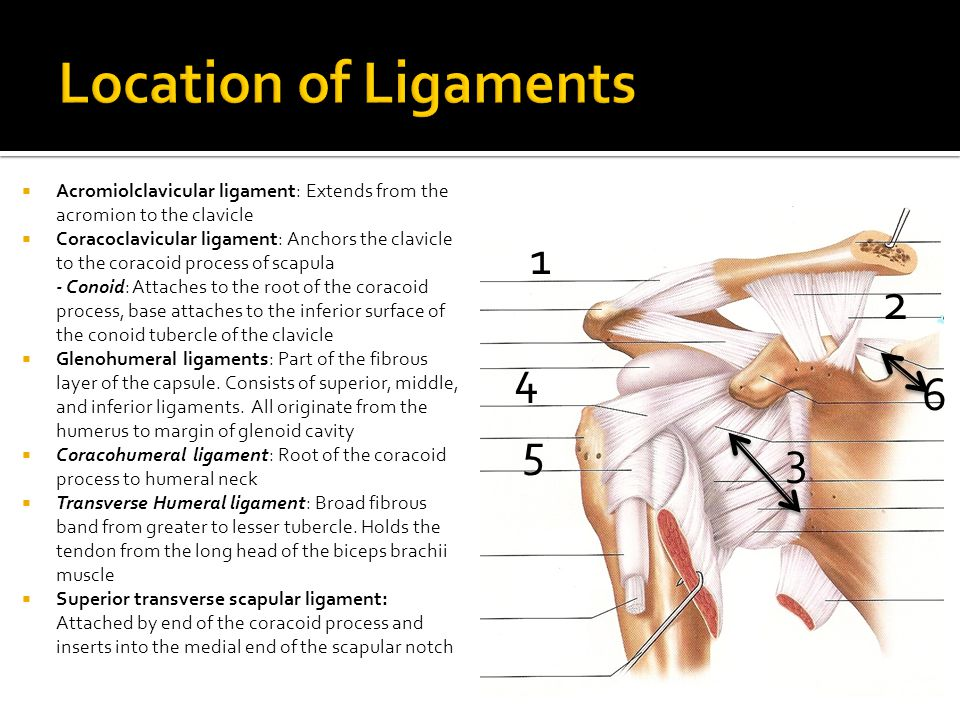 Location of Ligaments Acromiolclavicular ligament: Extends from the acromion to the clavicle.
