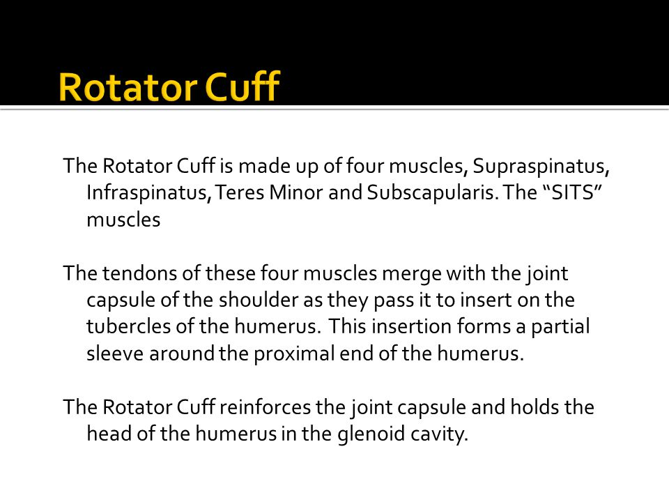 Rotator Cuff The Rotator Cuff is made up of four muscles, Supraspinatus, Infraspinatus, Teres Minor and Subscapularis. The SITS muscles.