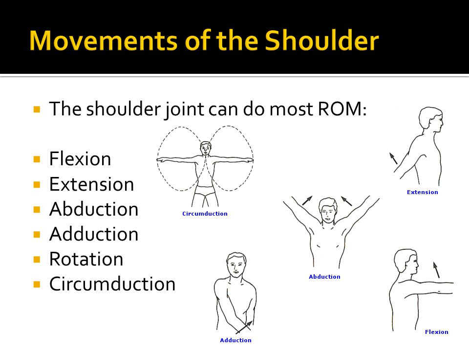 Movements of the Shoulder