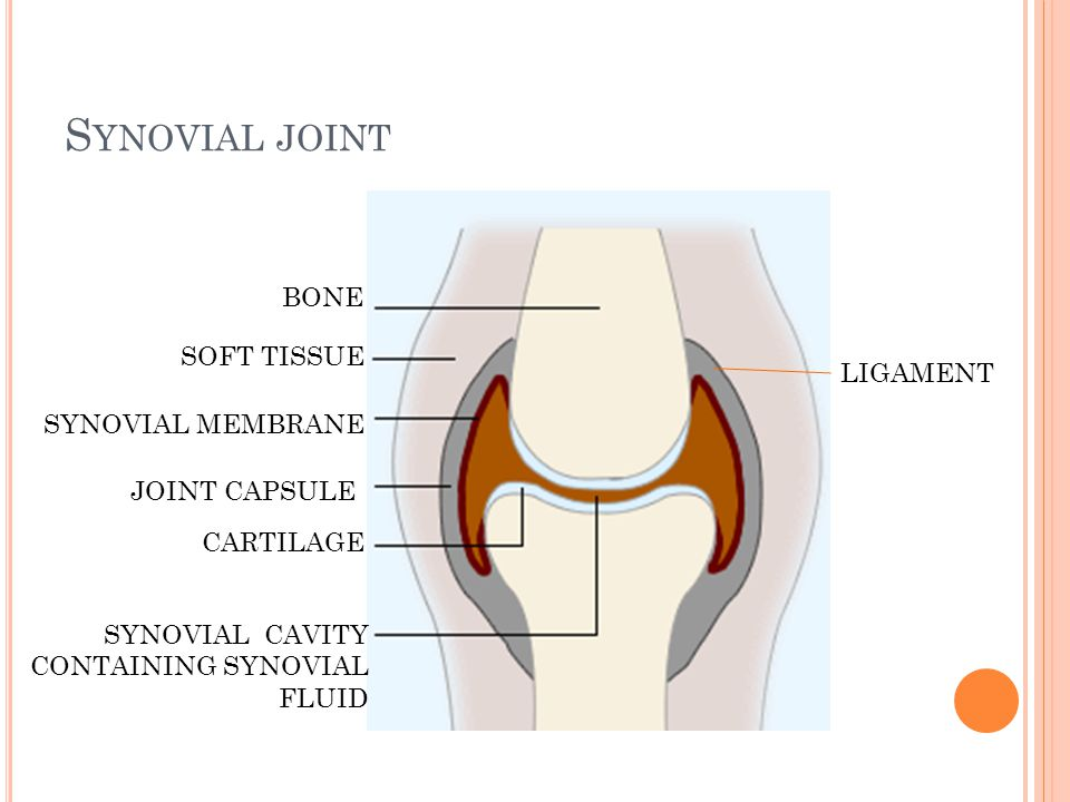 Synovial joint BONE SOFT TISSUE LIGAMENT SYNOVIAL MEMBRANE