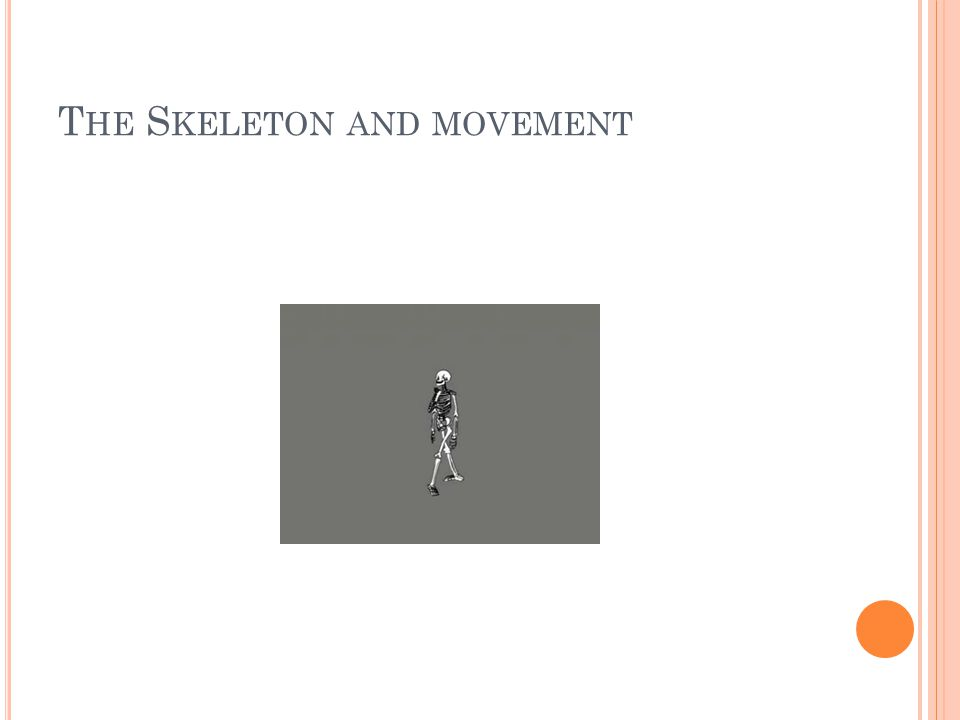 The Skeleton and movement