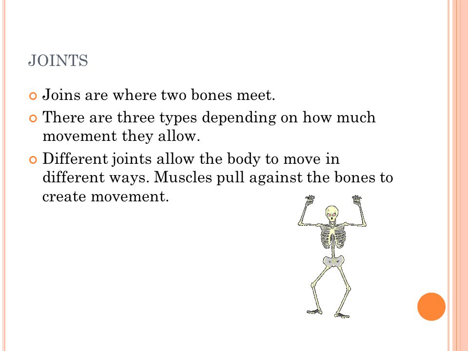 joints Joins are where two bones meet.