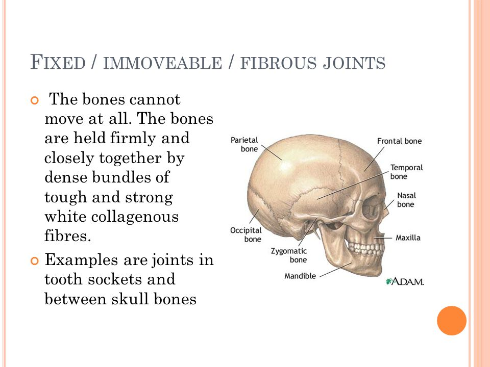 Fixed / immoveable / fibrous joints