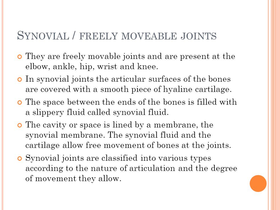 Synovial / freely moveable joints