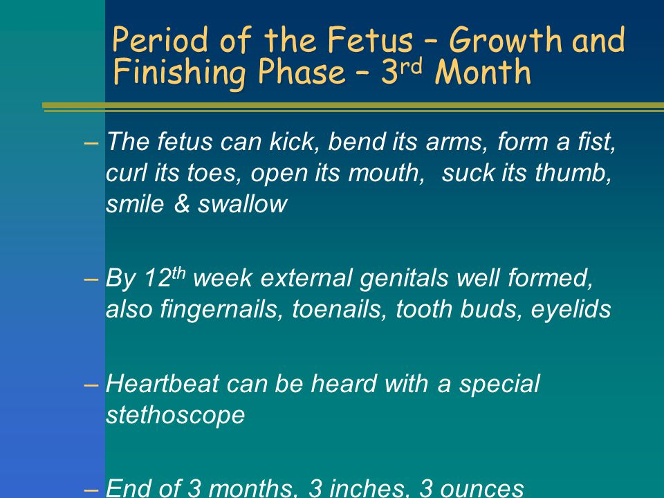 Period of the Fetus – Growth and Finishing Phase – 3rd Month