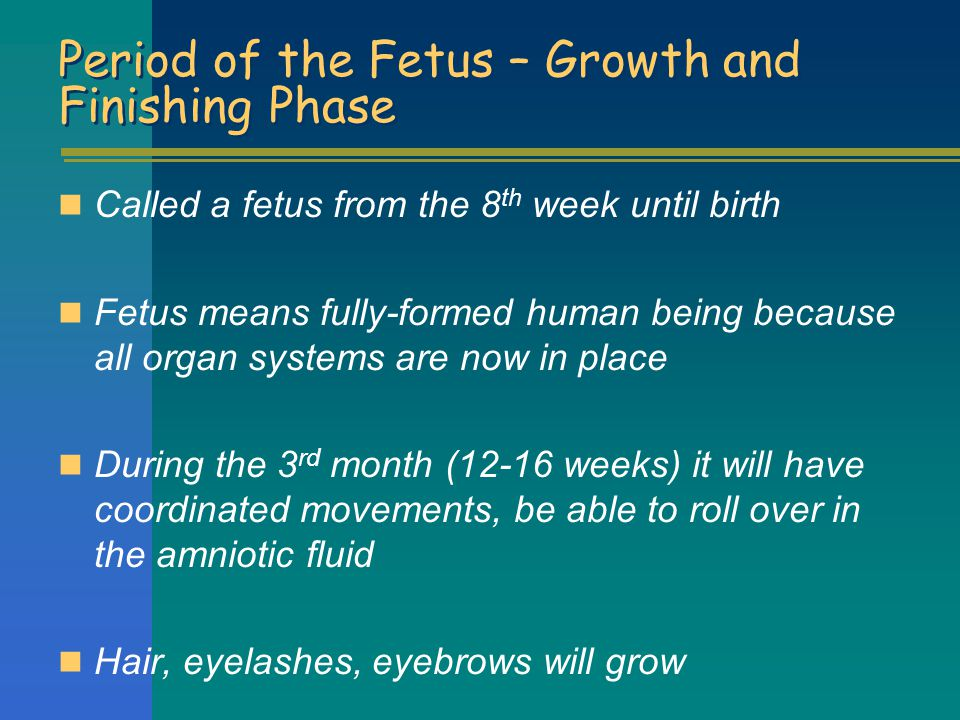 Period of the Fetus – Growth and Finishing Phase