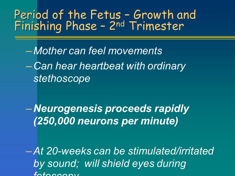 Period of the Fetus – Growth and Finishing Phase – 2nd Trimester