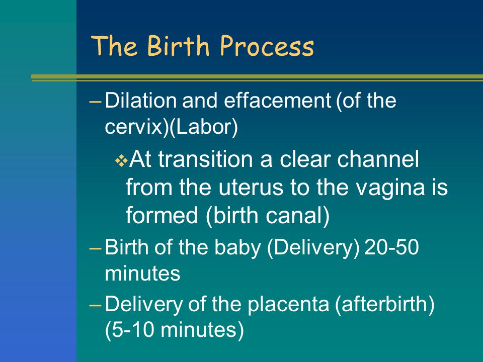 The Birth Process Dilation and effacement (of the cervix)(Labor) At transition a clear channel from the uterus to the vagina is formed (birth canal)
