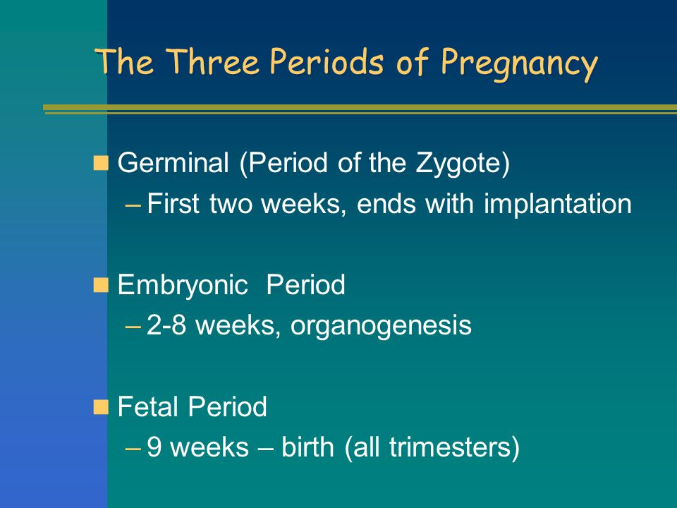 The Three Periods of Pregnancy