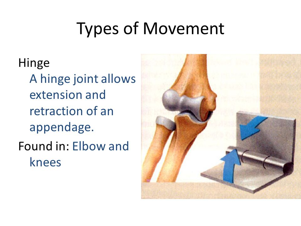 Types of Movement Hinge A hinge joint allows extension and retraction of an appendage.