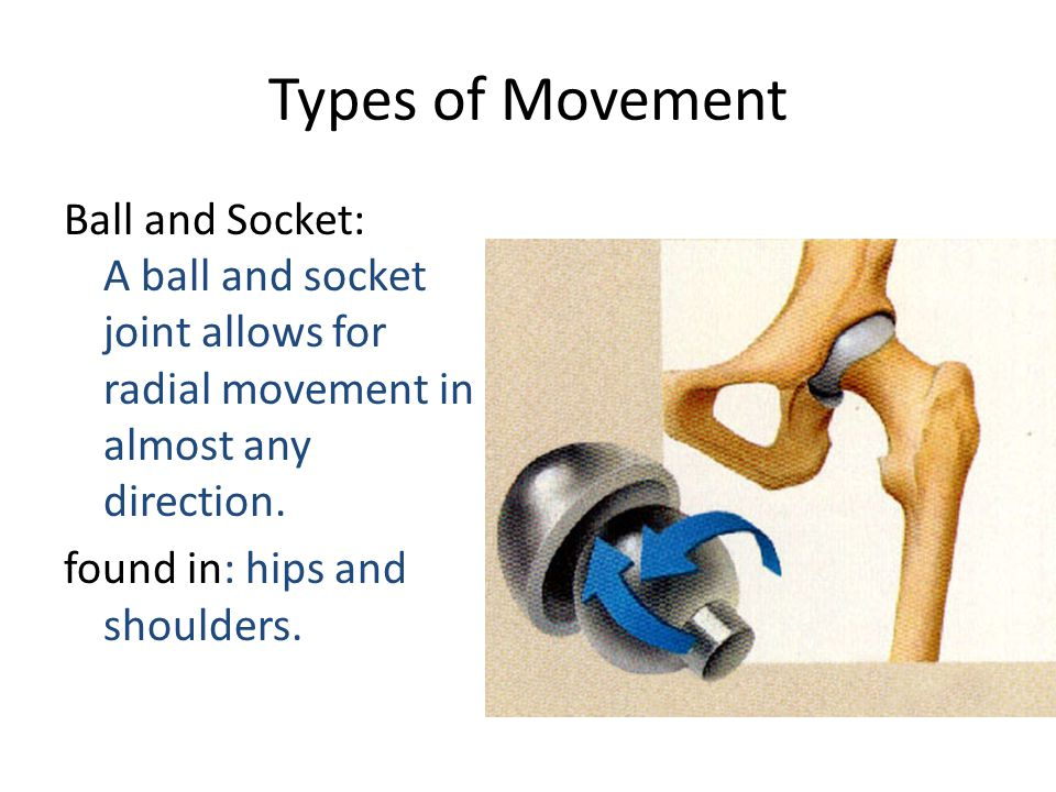 Types of Movement Ball and Socket: A ball and socket joint allows for radial movement in almost any direction.