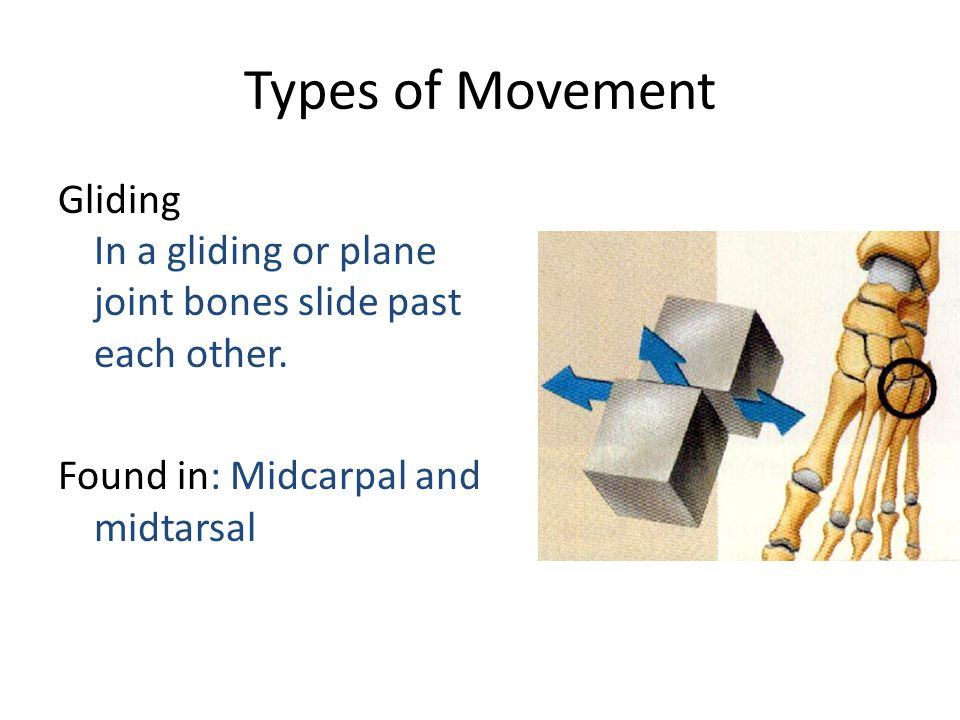 Types of Movement Gliding In a gliding or plane joint bones slide past each other.