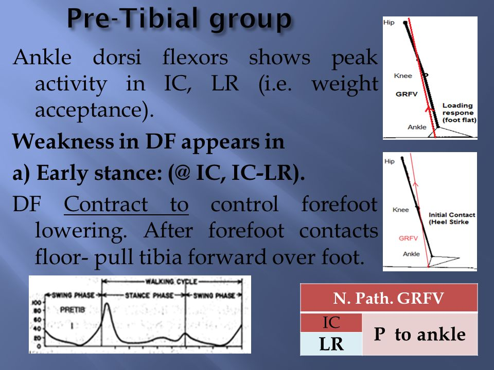 Pre-Tibial group Ankle dorsi flexors shows peak activity in IC, LR (i.e. weight acceptance). Weakness in DF appears in.
