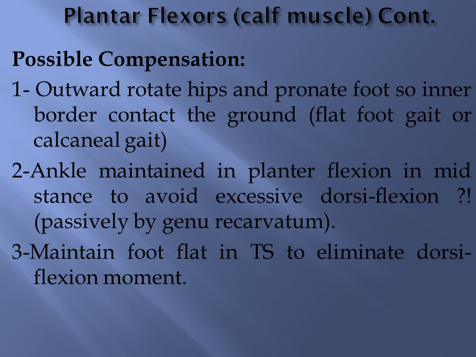 Plantar Flexors (calf muscle) Cont.