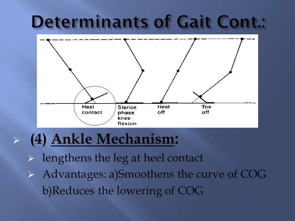 Determinants of Gait Cont.:
