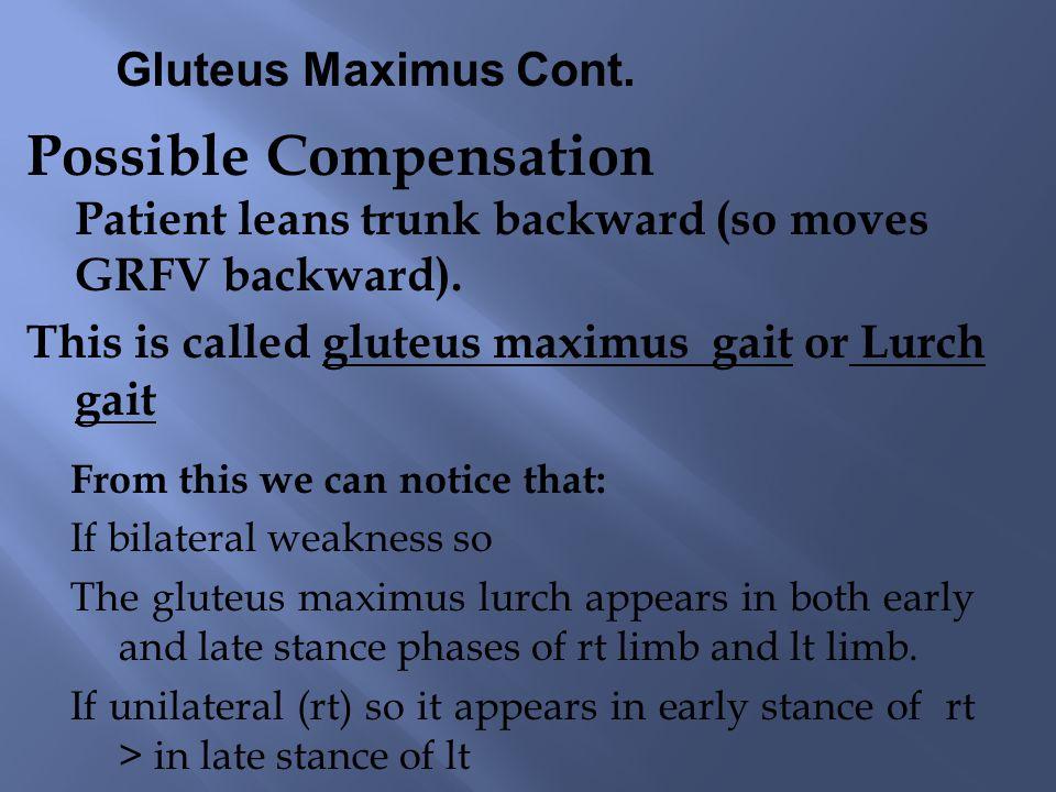 Gluteus Maximus Cont.