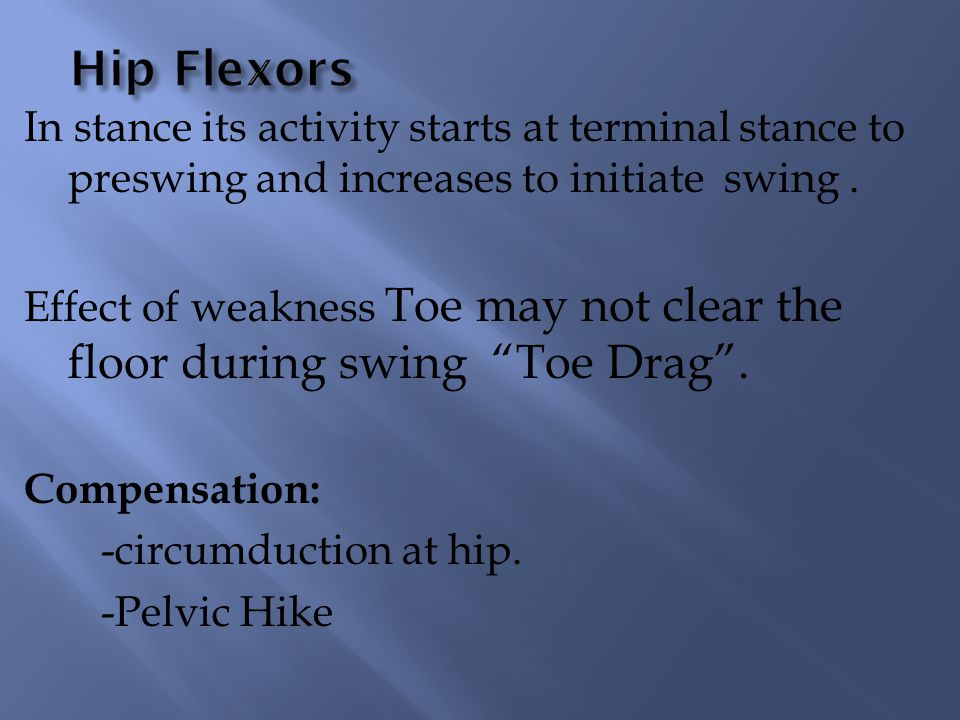 Hip Flexors In stance its activity starts at terminal stance to preswing and increases to initiate swing .