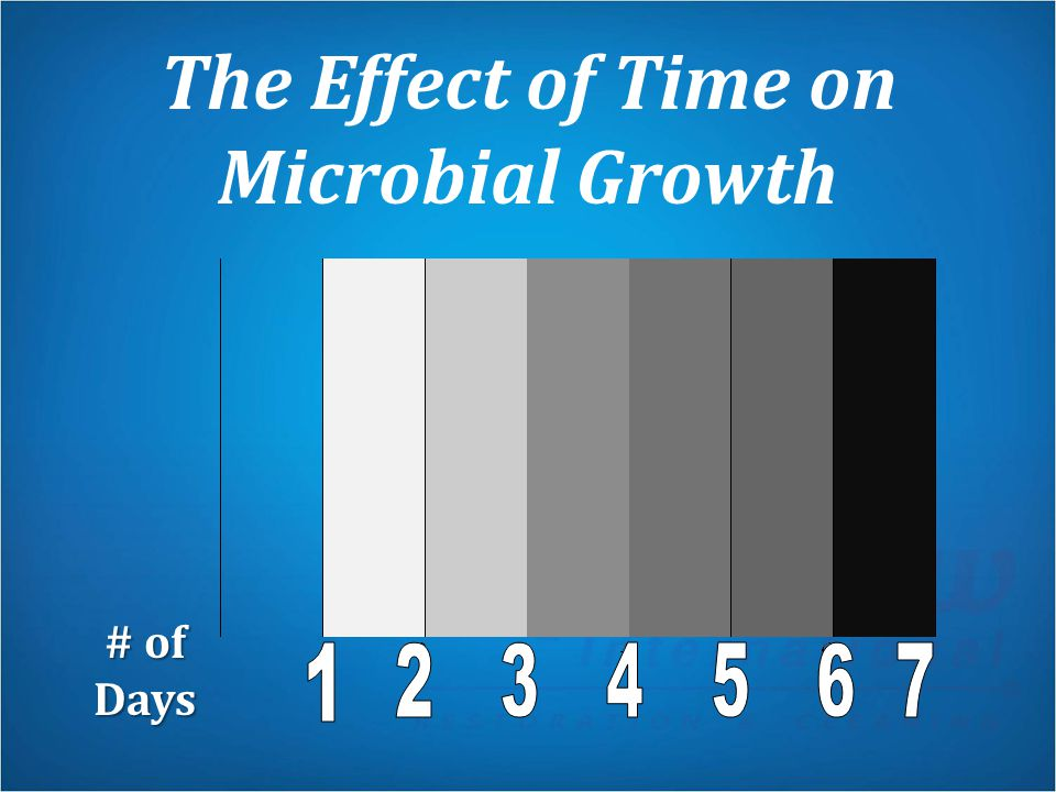 The Effect of Time on Microbial Growth