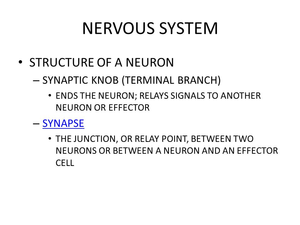 NERVOUS SYSTEM STRUCTURE OF A NEURON SYNAPTIC KNOB (TERMINAL BRANCH)