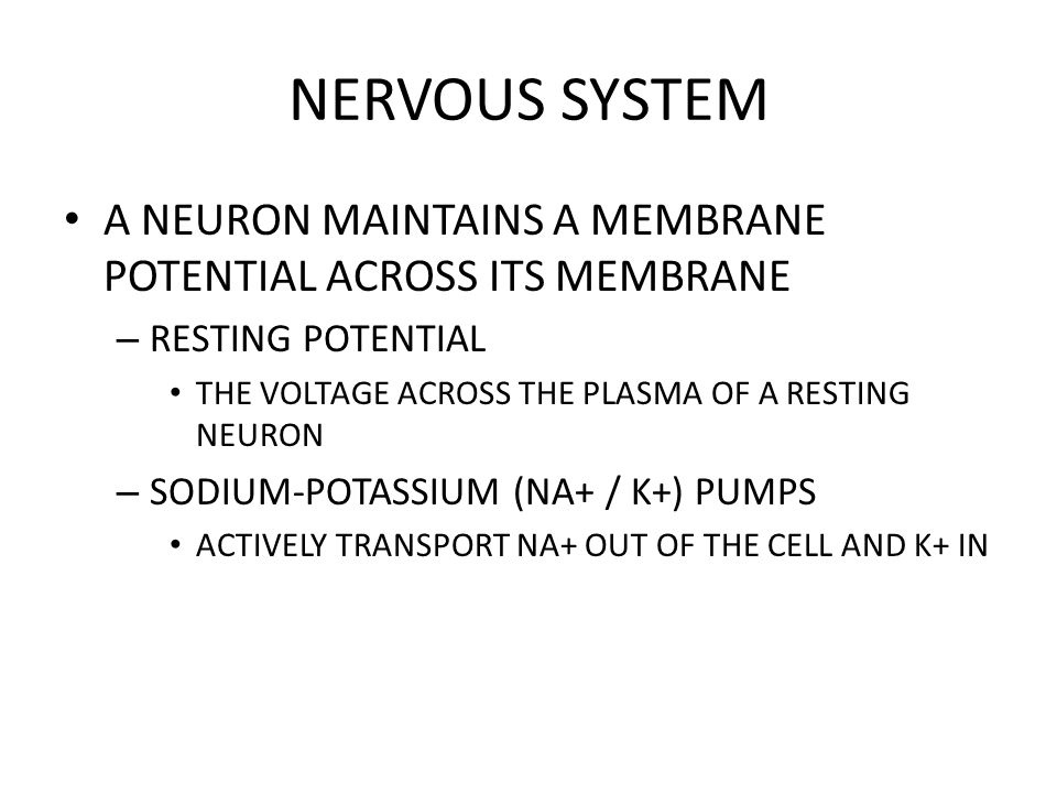 NERVOUS SYSTEM A NEURON MAINTAINS A MEMBRANE POTENTIAL ACROSS ITS MEMBRANE. RESTING POTENTIAL. THE VOLTAGE ACROSS THE PLASMA OF A RESTING NEURON.