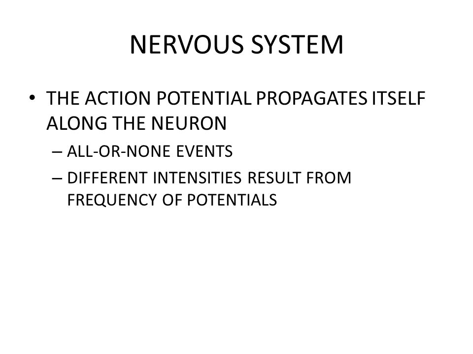 NERVOUS SYSTEM THE ACTION POTENTIAL PROPAGATES ITSELF ALONG THE NEURON