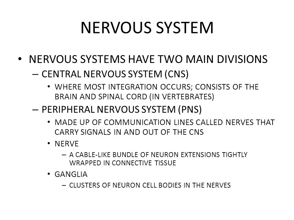 NERVOUS SYSTEM NERVOUS SYSTEMS HAVE TWO MAIN DIVISIONS