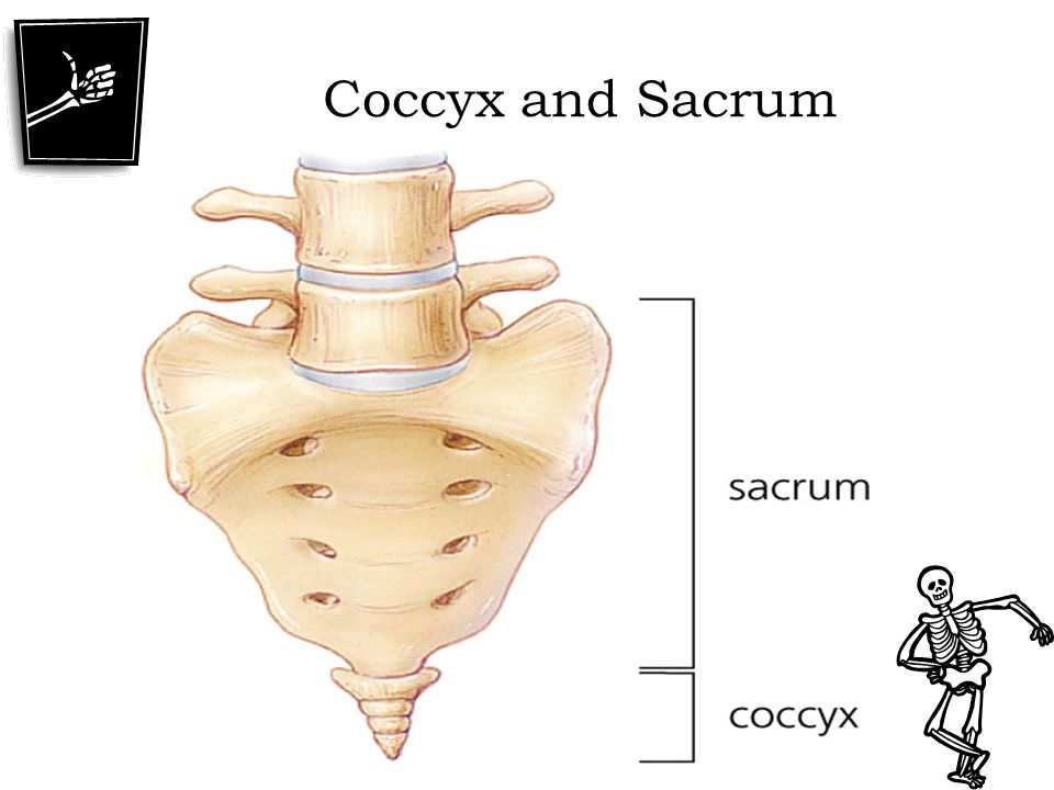 Coccyx and Sacrum