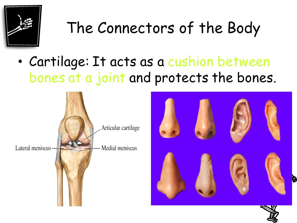 The Connectors of the Body