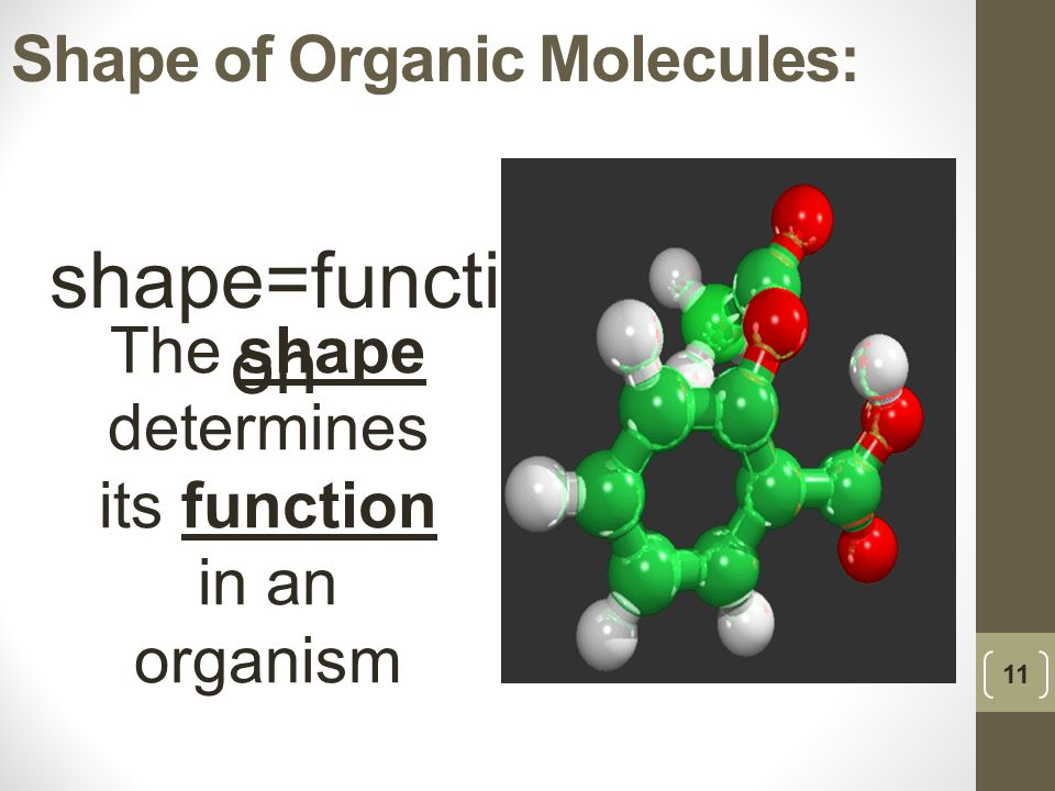 Shape of Organic Molecules: