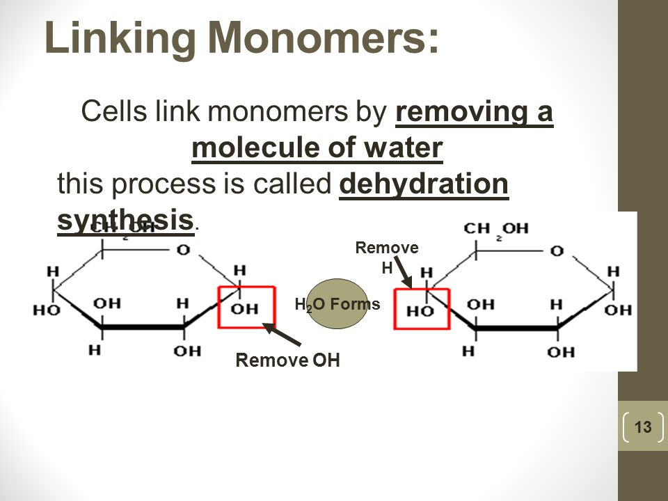 Cells link monomers by removing a molecule of water