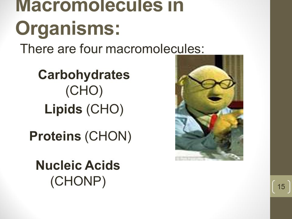 Macromolecules in Organisms: