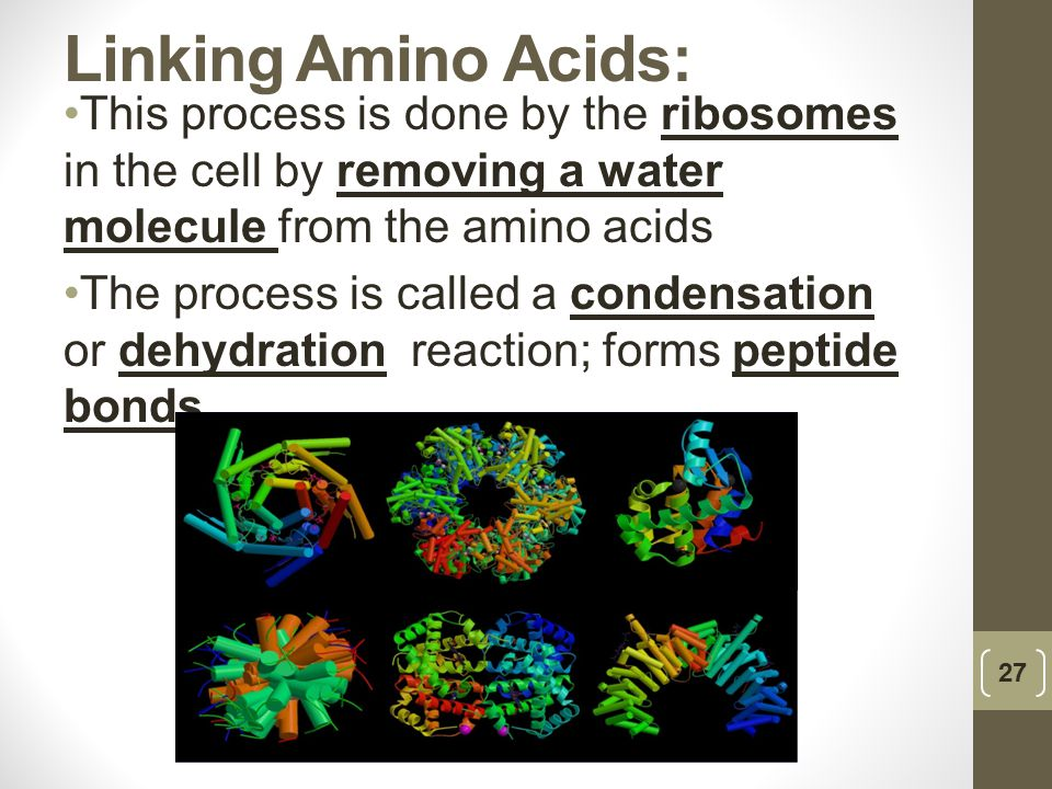 Linking Amino Acids: This process is done by the ribosomes in the cell by removing a water molecule from the amino acids.